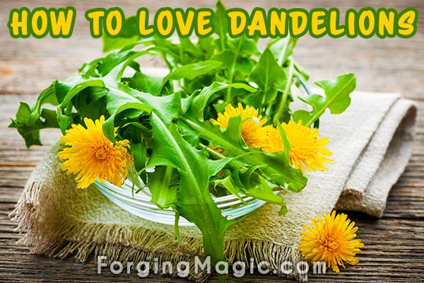 The Benefits of Dandelions