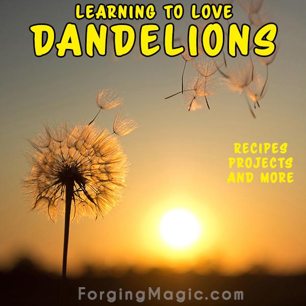 How to love Dandelions